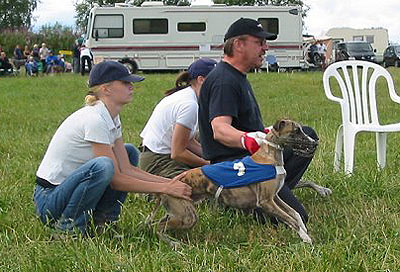 Taisto lure coursing